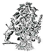 Σχέδιο του Dapper (1705)